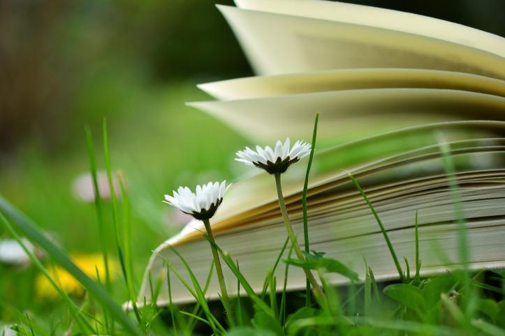 book-2304388_1920