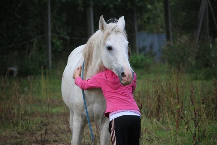 horse-958320_1920