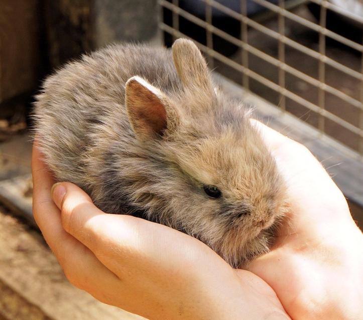 rabbit-1436329_1920.jpg