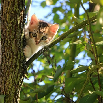 cat-1647775_1920