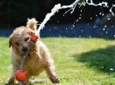 dog-1310545_1920