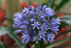flower-2285058_1920