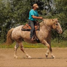 western-riding-587014_1920